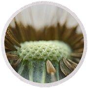 Dandelion Seed Macro Round Beach Towel