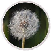 Dandelion With Abstract Grasses Round Beach Towel