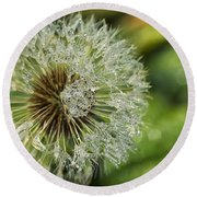 Dandelion With Water Drops Round Beach Towel