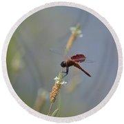 Dark Red Dragonfly Round Beach Towel