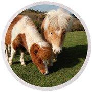 Dartmoor Ponies  Round Beach Towel