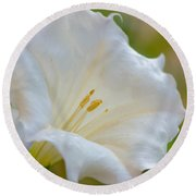 Datura Hybrid White Flower Round Beach Towel