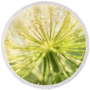 Daucus Carota - Queen Anne's Lace - Wildflower Round Beach Towel