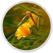 Day Lily Backlit Round Beach Towel