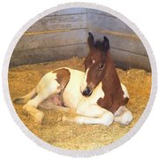 Day Old Colt Round Beach Towel