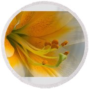 Gold Daylily Close-up Round Beach Towel