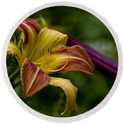 Daylily Picture 452 Round Beach Towel