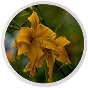Daylily Picture 474 Round Beach Towel
