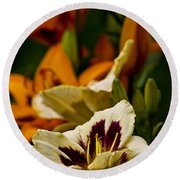 Daylily Picture 487 Round Beach Towel
