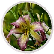 Daylily Picture 494 Round Beach Towel