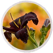 Daylily Picture 514 Round Beach Towel
