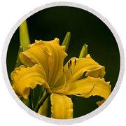 Daylily Picture 539 Round Beach Towel