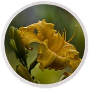 Daylily Picture 558 Round Beach Towel
