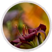 Daylily Pictures 571 Round Beach Towel