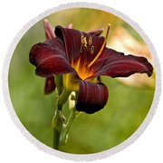 Daylily Pictures 576 Round Beach Towel