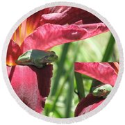 Daylily Shade For A Tree Frog Round Beach Towel