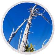 Dead White Trees Round Beach Towel