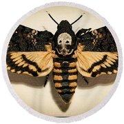 Deaths Head Hawk Moth Framed Version Round Beach Towel
