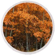 Deciduous Aspen Forest In Fall Round Beach Towel