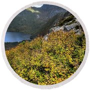 Deciduous Beech Or Fagus In Colour Round Beach Towel