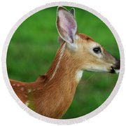 Deer 16 Round Beach Towel