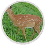 Deer 19 Round Beach Towel
