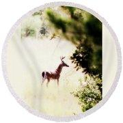 Deer 2 - Buck - White-tailed Round Beach Towel