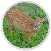Deer 20 Round Beach Towel