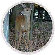 Deer 3 Round Beach Towel