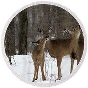 Deer Affection Round Beach Towel