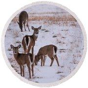 Deer At Dusk Round Beach Towel