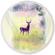 Deer - Buck - White-tailed Round Beach Towel