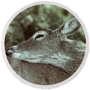Deer Close-up Round Beach Towel