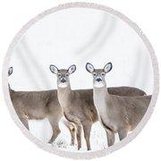 Deer Deer Deer Round Beach Towel