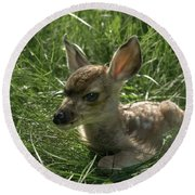 Deer Fawn Round Beach Towel
