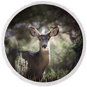 Deer I Round Beach Towel