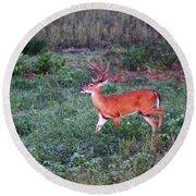 Deer-img-0113-001 Round Beach Towel