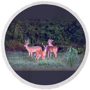 Deer-img-0150-001 Round Beach Towel