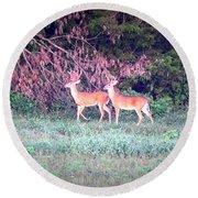 Deer-img-0151-003 Round Beach Towel
