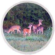 Deer-img-0160-005 Round Beach Towel