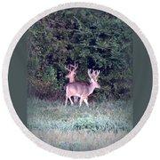 Deer-img-0177-001 Round Beach Towel