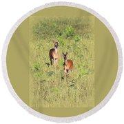 Deer-img-0283-001 Round Beach Towel