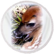 Deer-img-0349-002 Round Beach Towel