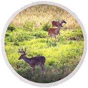 Deer-img-0437-001 Round Beach Towel