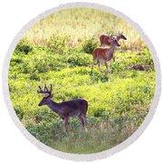 Deer - 0437-004 Round Beach Towel