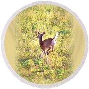 Deer-img-0456-001 Round Beach Towel