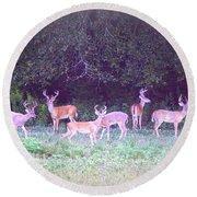 Deer-img-0470-002 Round Beach Towel