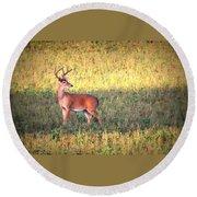 Deer-img-0627-002 Round Beach Towel