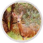 Deer In Forest Round Beach Towel