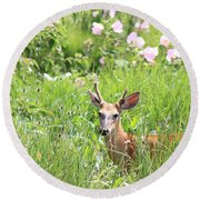 Deer In Magee Marsh Round Beach Towel
